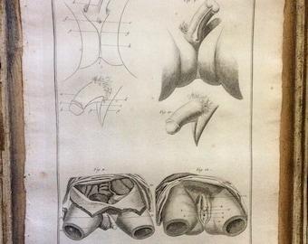 Authentic original Antique Print. HERMAPHRODITE. Sexuality. SEX ORGAN.-Pl. 3-Denis Diderot-1751. The Encyclopedia. Cabinet de curiosités