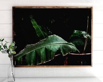 Leaf Photo, Printable Art, Printable Home Decor, Modern Print, Digital Art Print, Art Decor, Leaf Art Decor, Leaf Print, Natural Prints