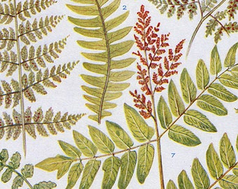 Set of Four Vintage Fern Charts
