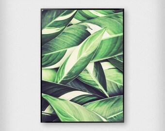 Leaves Illustration Print | Botanical | Green | Tropical - Leaf - Poster