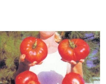 GIANT Delicious Tomato 30 Seeds World Record 7 lbs 12 oz! Big Heirloom Non-GMO
