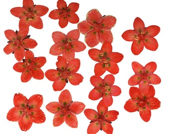 Pressed flowers, marsh grass of Parnassus dark orange 15pcs for floral art, craft, card making