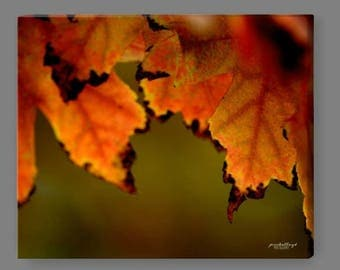 Canvas Print - Autumn Leaves II