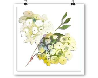 White hydrangea floral unframed print