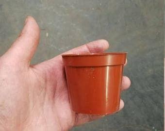 """2"""" Growing Pot"""