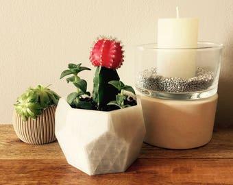 Succulent & Cactus Planter