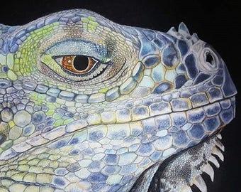 Lizard, Iguana, pet