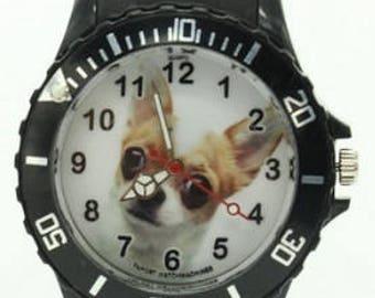Dog Watch (Chihuahua chihuahua)