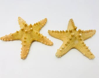 Real starfish, starfish, shell, real starfish, beach decor