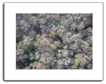 Tree Tops View - Tree Top Print - View of Tree Tops - Nature Prints - 11 x 14
