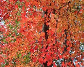 Vibrant Reds