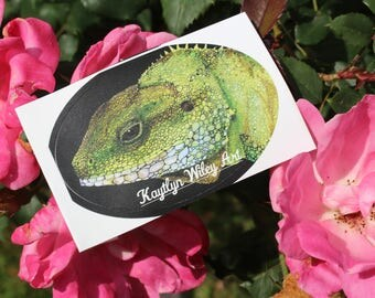Brody the Chinese Water Dragon Sticker