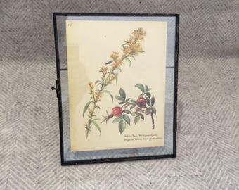 Genuine vintage framed botanical drawing, flower illustrations, print, floral, glass frame, double sided red tomatoes yellow vegetables