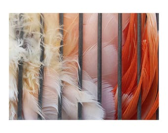 Wall Art Print, Photograph, Bird Feather Ombre, Caged