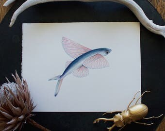 Flying Fish Print