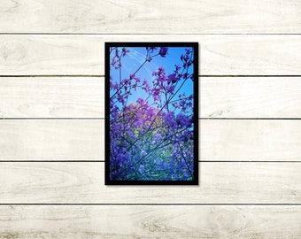 Tranquility, Floral Photography, A3 Unframed High Gloss 140gsm, wall art, Unframed photo, A3 (29.7cm x 42cm), Flower print, Modern Art