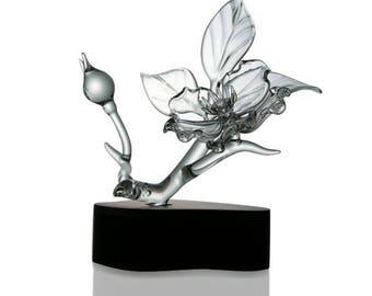 Cherokee Rose, Single Blossom