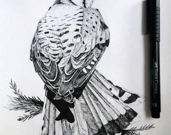 Kestrel Ink Print