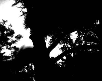 Abstract art photography - Vegetation - trees & sky