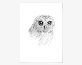 Fine art print - Owl