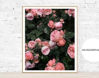 Roses Print, Roses Poster, Flower Print, Flower Poster, Roses Decor, Roses Wall Art, Flower Decor, Botanical Print, Pink Poster, Rose Print
