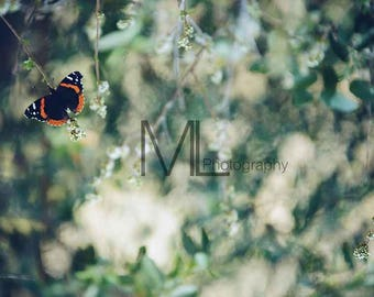 Beautiful Butterfly Photo, butterflies, insect, wall art, home decor, nature photography, butterfly photography, Digital Download