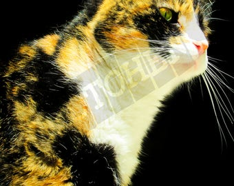 Calico Angel - Instant Digital Download - Printable - Fine art - Animal Photography