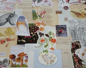 Nature Ephemera Collage Pack #3, 30+ pieces paper pack, Paper ephemera lot, junk journal pack, theme paper lot