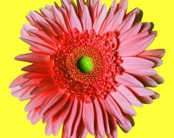 Flower Photography, Pink Gerber daisy, Wall art, Home decor, Girls bedroom art, Print, Fine art, Digital download, baby girl, Flower art