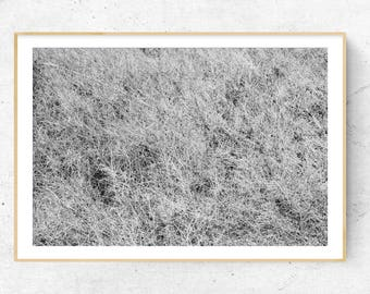 Frozen, dew, fog, grasslands, Photography, grey, white, abstract, Art, illusion, grashalm, nature, Relaxation, interior, design, home