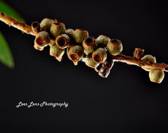 Native Seed Pods Digital Download - Digital Photography Wall Art Photography