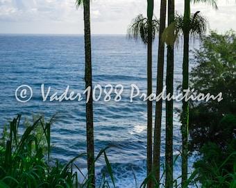 Ocean and Tropical Forest, Kona Hawaii