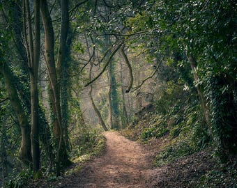 Fine Art Photography Print Wall Art Nature Lover Gift 'Woodland Path'