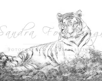Digital download for your own prints-motif tiger in sketch style