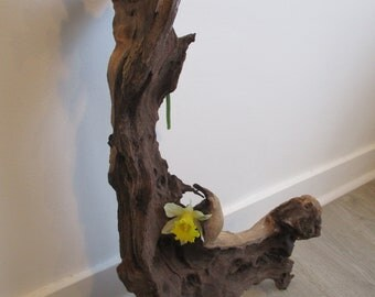 corkscrew vine/foot vine