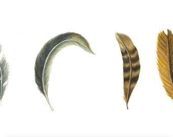 Feather Series