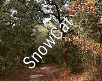 Fairytale Woods