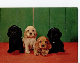 Vintage We Miss You Puppy Postcard |  Photograph Card Spaniels Dogs Puppies Pups Pets Dog | Paper Ephemera