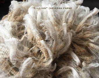 WASHED Wool: Lillian a CVM Romeldale hogget