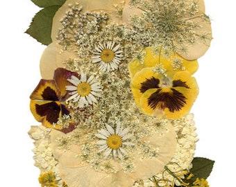 "5x7 Greeting Card ""Dried Flowers 4"""