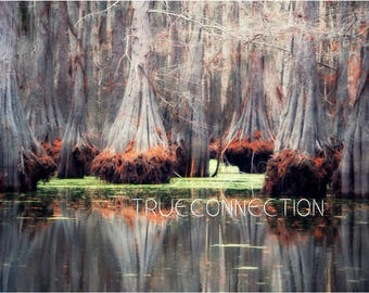 Instant Download Printable Photo Bayou Art Nature Water Photography Green Red Moss Fall Trees Swamp Lake house Print Cabin Louisiana