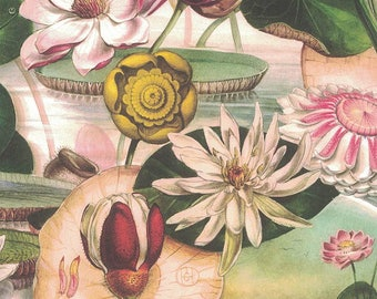 Water Lily Collage Print Paper ~ Bomo Hungary BOM24
