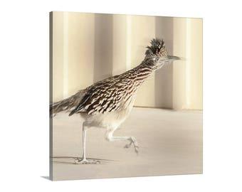 Roadrunner, Wall Picture, Square Art, Avian Art, Bird Art, Bird Print, Wildlife Art, Bird Photography, Canvas Wrap, Tucson, Picture Gift