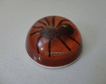 VINTAGE taxidermy TARANTULA in resin PAPERWEIGHT