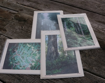 Redwood Forest Nature Gift Card Blank Birthday Card Note Card Foggy Redwood Tree  Redwood National Park Critters Thank you card