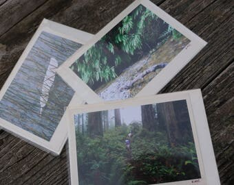 Redwood Forest Nature Gift Card Blank Birthday Card Note Card Fern Canyon Park Trails Thank you card Floating Feather