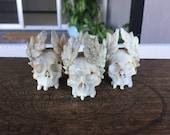 Hand Carved Bone Skull Bead Memento Mori Vanitas Victory Laurel Wreath Crown