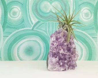 Crystal Air Plant, Standing Amethyst Geode, Crystal Gift For Friend, Gardener, Naturalist, Under 50