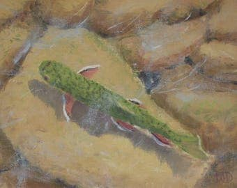Fly fishing art, brook trout, trout paintings, wildlife art, stream paintings,