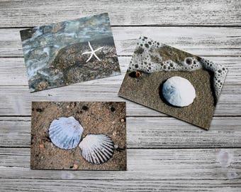 Seashell Photography- 3 Print Set, Sea Life Photos, scallop shells, sand dollar, starfish, beach wall art, coastal decor, beach photography